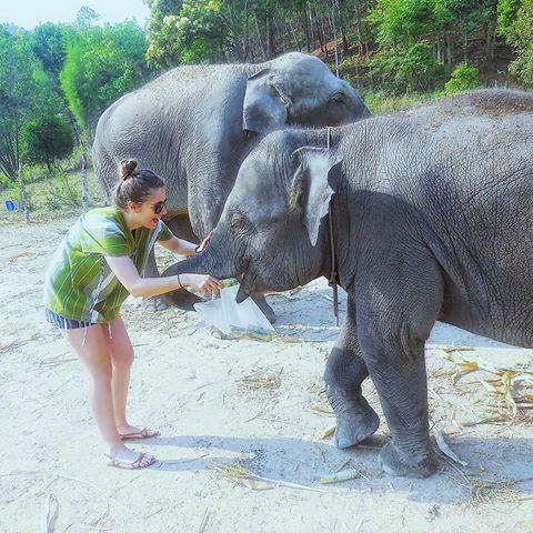 Perrine Enjolras qui nourrit les éléphants en Thaïlande