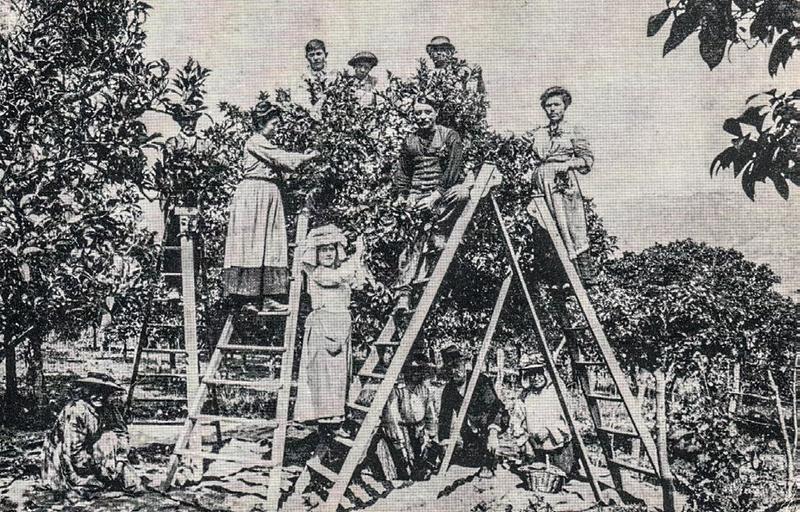 Ancienne photographie de Léontine Laugier et sa famille au milieu de l'orangeraie.